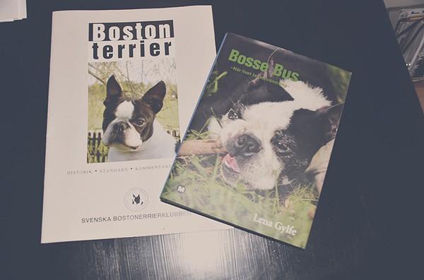 Dating i Boston rolig söt nytt